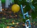 LemonYannWeb