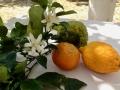 fruitandflowerWeb
