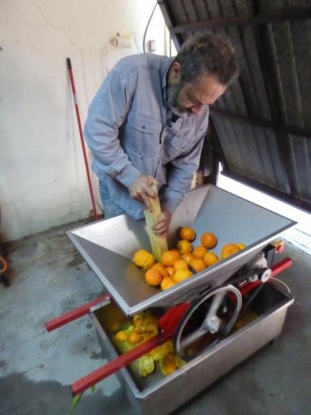 Orangen pressen