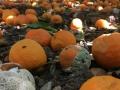 Orangen verfaulen